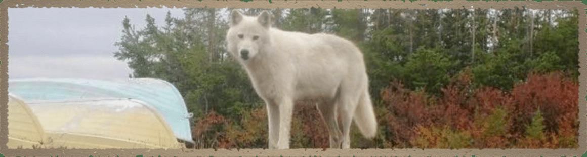 lynx-tundra-lodge